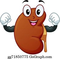 Kidney Clip Art Royalty Free Gograph