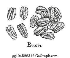 Pecan Clip Art - Royalty Free - GoGraph (236 x 194 Pixel)