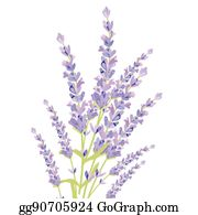 Lavender Oil Clip Art Royalty Free Gograph