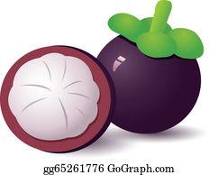 Clip Art Vector Vector Of Mangosteen Stock Eps Gg103009001 Gograph