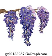 Wisteria Stock Illustrations, Cliparts And Royalty Free Wisteria Vectors