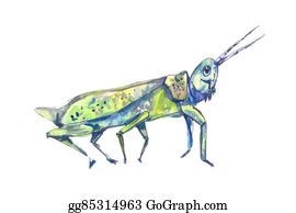 locust stock illustrations  royalty free  gograph