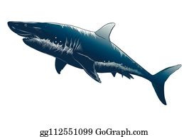 California's beachgoers learn to live with great whites ... |Shark Anatomy Illustration