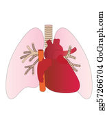 Lungs Clip Art - Royalty Free - GoGraph