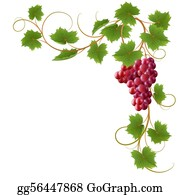 Grape Vine Clip Art Royalty Free Gograph